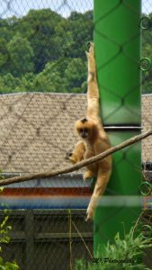 tan monkey hanging out